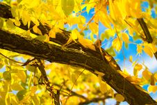Free Branch, Yellow, Leaf, Tree Stock Photography - 113069502