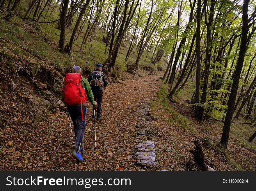 Path, Woodland, Wilderness, Tree