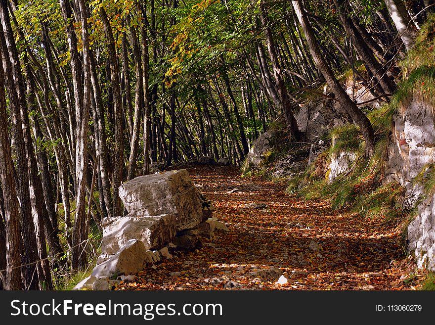 Nature, Woodland, Tree, Nature Reserve