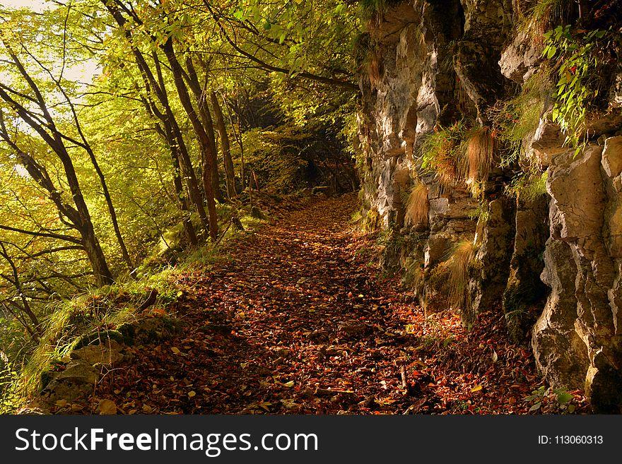 Nature, Woodland, Vegetation, Forest