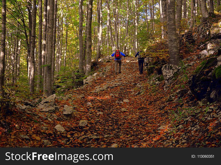Path, Woodland, Forest, Deciduous