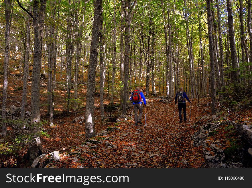 Woodland, Nature, Path, Ecosystem