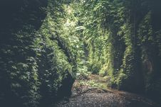 Free Cave Filed With Green Plants Stock Photography - 113143662