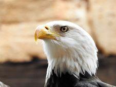 Free Bird Of Prey, Bird, Beak, Eagle Royalty Free Stock Image - 113147096