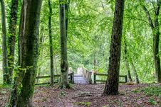 Free Woodland, Green, Nature, Forest Stock Image - 113147971