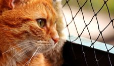 Free Cat, Whiskers, Small To Medium Sized Cats, Fauna Royalty Free Stock Photo - 113149095