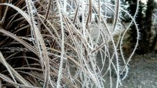 Free Frost, Branch, Freezing, Winter Stock Images - 113150644