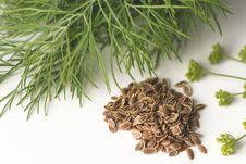 Free Herb, Ingredient, Black Cumin, Vegetarian Food Royalty Free Stock Images - 113151769