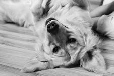 Free Dog, Dog Like Mammal, Black And White, Dog Breed Royalty Free Stock Photo - 113152045