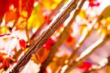Free Autumn, Petal, Flavor Stock Image - 113152601