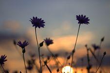 Free Flower, Sky, Purple, Wildflower Royalty Free Stock Photo - 113153925