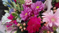 Free Flower, Pink, Flower Arranging, Floristry Royalty Free Stock Images - 113154139