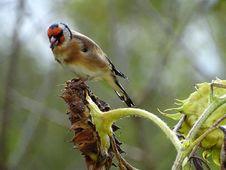 Free Bird, Beak, Finch, Fauna Stock Photography - 113155092