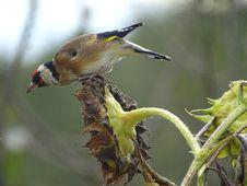 Free Bird, Beak, Fauna, Finch Royalty Free Stock Photos - 113155218