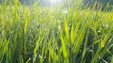 Free Grass, Field, Vegetation, Grass Family Royalty Free Stock Photo - 113155295