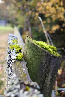 Free Grass, Tree, Plant, Moss Stock Photo - 113155870