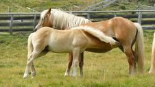 Free Horse, Mane, Mare, Pasture Royalty Free Stock Image - 113156706