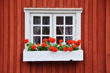 Free Flower, Window, Home, Floristry Royalty Free Stock Photo - 113157015
