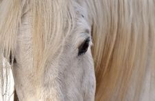 Free Hair, Horse, Mane, Horse Like Mammal Stock Photography - 113159242
