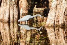 Free Water, Reflection, Tree, Woody Plant Royalty Free Stock Photos - 113160298