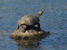 Free Turtle, Tortoise, Sea Turtle, Water Royalty Free Stock Photography - 113160627