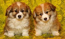 Free Dog, Dog Like Mammal, Dog Breed, Mammal Royalty Free Stock Photography - 113162247