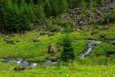 Free Vegetation, Nature, Ecosystem, Nature Reserve Royalty Free Stock Image - 113163796