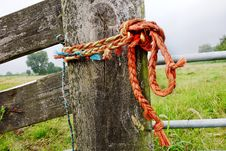 Free Tree, Rope, Grass, Wood Stock Photography - 113164482