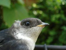 Free Bird, Beak, Fauna, Eye Stock Photos - 113164643