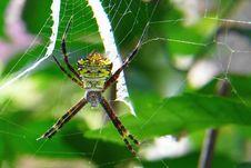 Free Spider, Arachnid, Orb Weaver Spider, Invertebrate Stock Image - 113165991