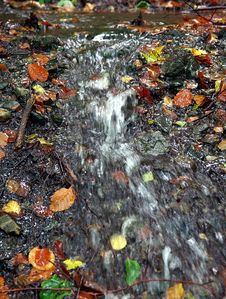 Free Water, Nature, Leaf, Stream Royalty Free Stock Photography - 113166587