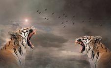 Free Tiger, Mammal, Wildlife, Roar Stock Photography - 113167932