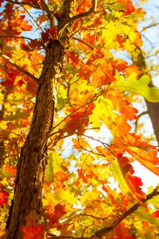 Free Yellow, Tree, Autumn, Leaf Royalty Free Stock Image - 113168406