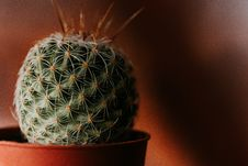 Free Green Cacti With Brown Vase Royalty Free Stock Image - 113232316