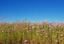 Free Photography Of Flowers Under Clear Sky Royalty Free Stock Images - 113232339