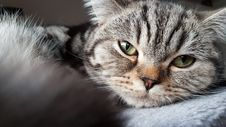 Free Cat, Whiskers, Mammal, Eye Royalty Free Stock Images - 113240739