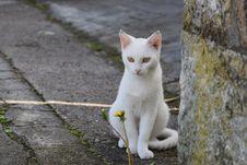 Free Cat, Fauna, Small To Medium Sized Cats, Cat Like Mammal Royalty Free Stock Photos - 113240858