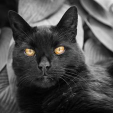 Free Cat, Black Cat, Whiskers, Black Stock Photo - 113240860