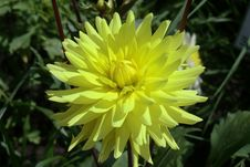 Free Flower, Yellow, Plant, Flowering Plant Royalty Free Stock Photo - 113240915