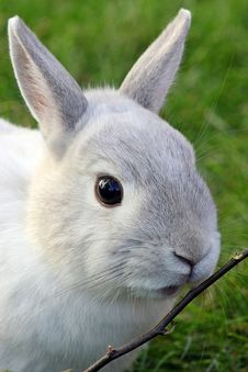 Free Rabbit, Fauna, Mammal, Domestic Rabbit Stock Images - 113240984