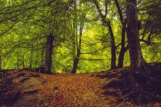 Free Woodland, Nature, Forest, Ecosystem Stock Photography - 113241192