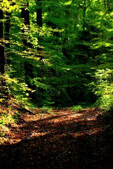 Free Nature, Woodland, Vegetation, Forest Stock Image - 113241231
