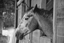 Free Horse, Black And White, Fauna, Horse Like Mammal Stock Photo - 113241410