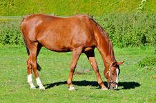 Free Horse, Pasture, Ecosystem, Mare Stock Image - 113241441