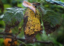 Free Leaf, Flora, Plant Pathology, Insect Stock Photography - 113241442