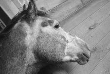 Free Horse, Black And White, Fauna, Horse Like Mammal Royalty Free Stock Photo - 113241455