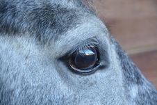 Free Eye, Nose, Mane, Horse Stock Photo - 113241510