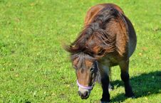 Free Horse, Grazing, Pasture, Grass Royalty Free Stock Photo - 113241515