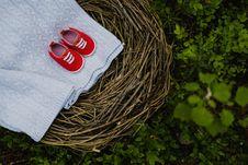 Free Grass, Bird Nest, Tree Stock Photography - 113241552