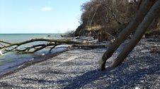 Free Shore, Water, Tree, Sea Stock Images - 113241734
